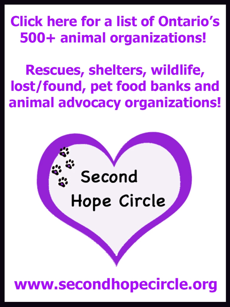 500+ Ontario animal organizations are just a click away